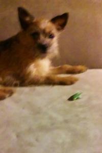 ChewBella guarding an evil katydid.